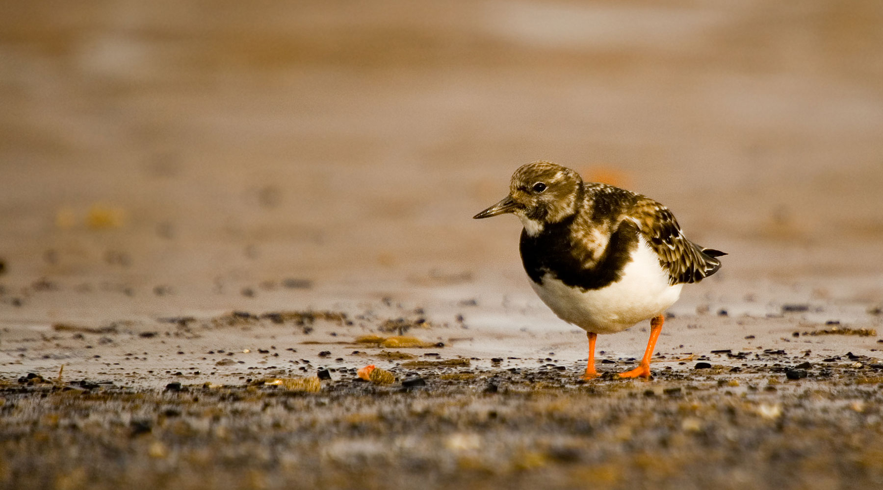 Neil Aldridge | Turnstone