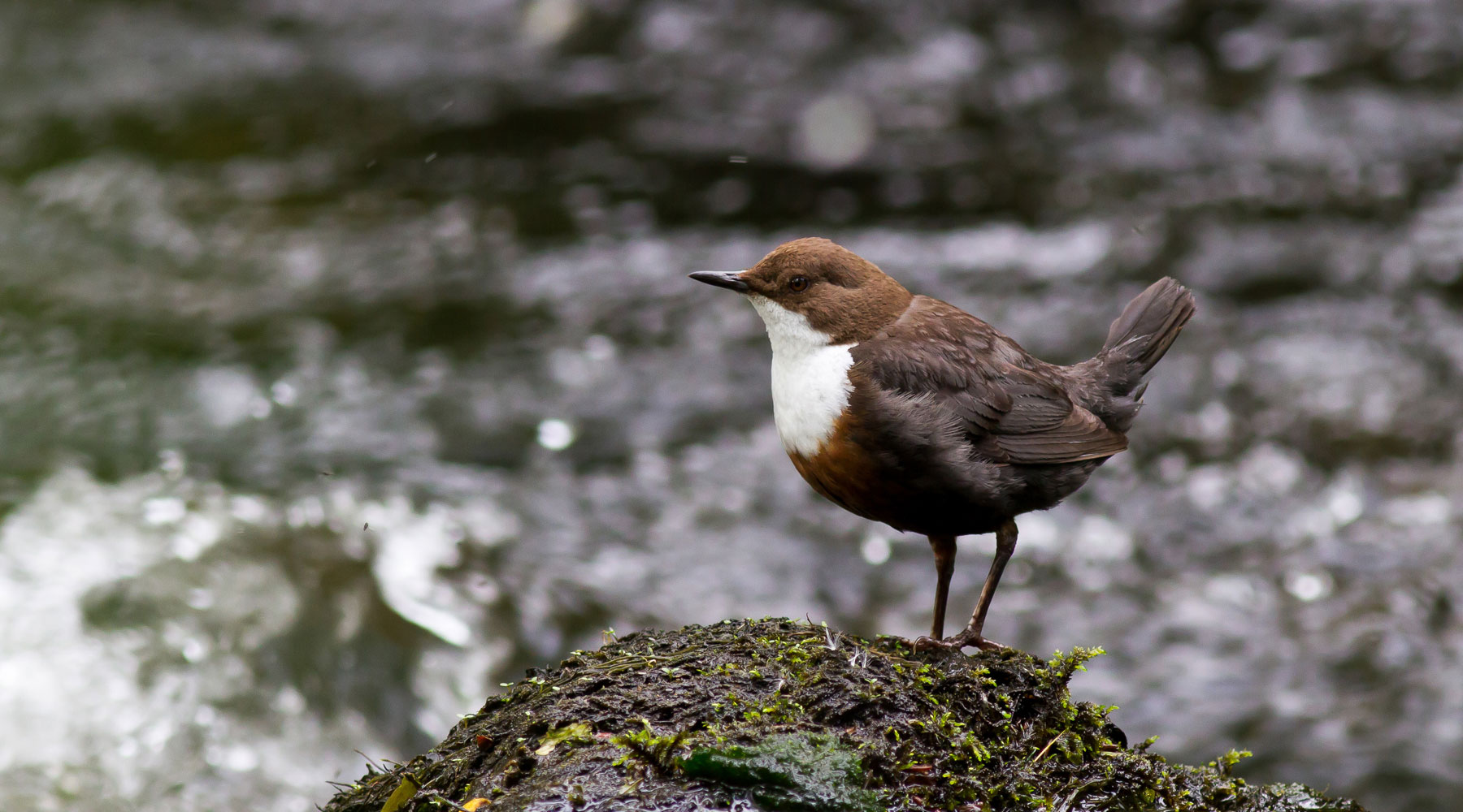 Mike Snelle | Dipper